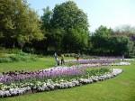 Rose garden v Hyde Parku