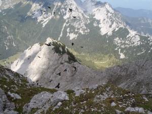 Pogled z Begunjščice