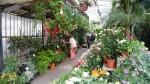 Rožna tržnica